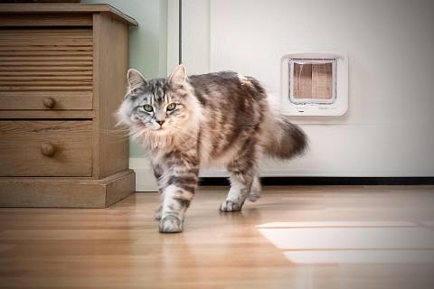 Köp kattlucka och kattdörr på HORNBACH.se