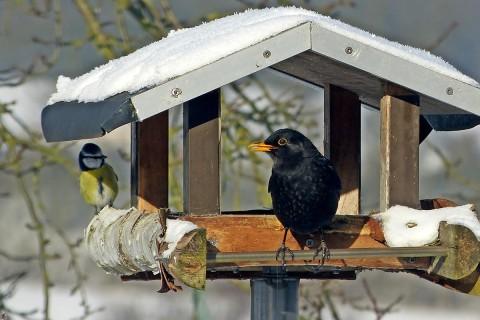 Köp fågelbord, fågelholkar & insektshotell på HORNBACH.se