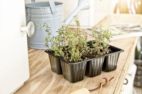 Köp planteringskruka på HORNBACH