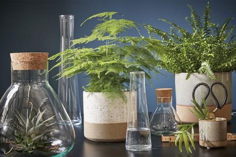 Köp vaser på HORNBACH