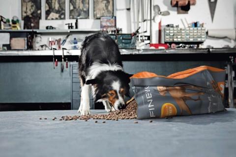 Köp hundmat online hos HORNBACH