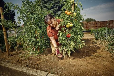 Köp grönsaksgödsel & fruktgödsel på HORNBACH