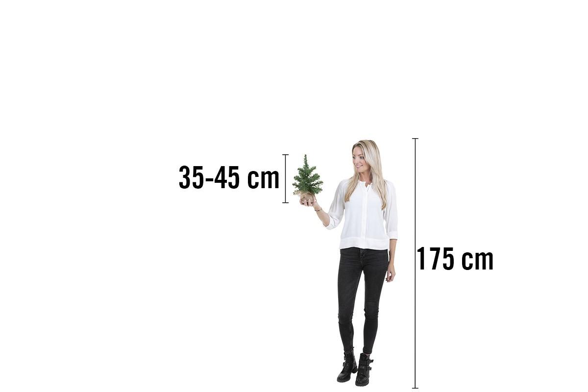 Konstjulgran 35 45 cm