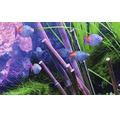 Akvarielysrör JUWEL T5 High-Lite® Colour 1200mm 54W