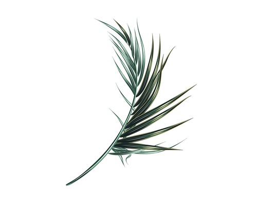 Poster Palm Leaf 30x40 cm