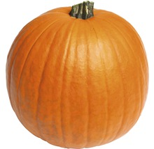 Halloweenpumpa Ø25-35cm