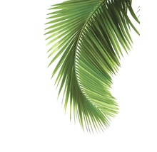 Poster Palm Tree 40x50cm
