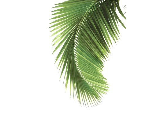Poster Palm Tree 40x50cm