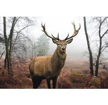 Maxi Poster Hjort i skogen 61x91,5cm