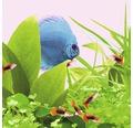 Akvarielysrör JUWEL fluroscerande Colour-Lite 15W