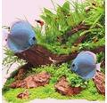 Akvarielysrör JUWEL T5 High-Lite® Colour 35W