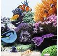 Akvarielysrör JUWEL High-Lite Nature 438mm 24W
