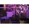 Spotlight PHILIPS Hue Lily Basekit White & Color Ambiance 8W 640lm 2000-6500K H 194mm svart IP65 3-pack - kompatibel med SMART HOME by hornbach
