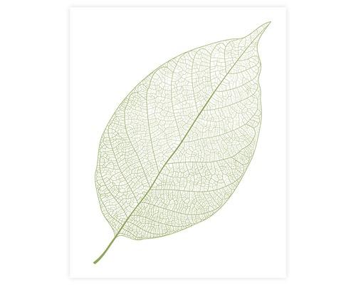Poster Leaf 40x50cm