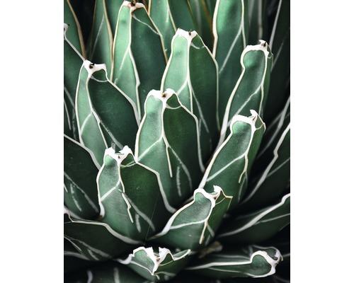 Poster Green Plant 40x50cm