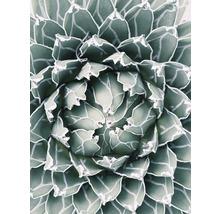 Poster Plant 30x40cm