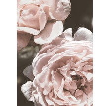 Posters Rose Vintage 50x70cm