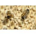 Insektshotell Rustik grentak 29x14x43cm