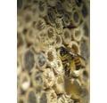 Insektshotell Rustik barktak 30x12x37cm