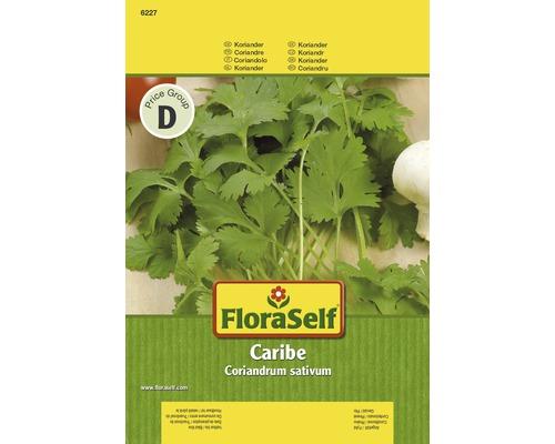 Kryddväxtfrö FLORASELF Koriander Caribé