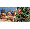 Terrariebakgrund FLUVAL 30cm bromelia/terrarieöken metervara