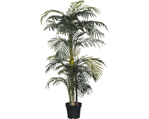 Konstväxt MICA Areca Palm Golden Cane 160xXØ100cm