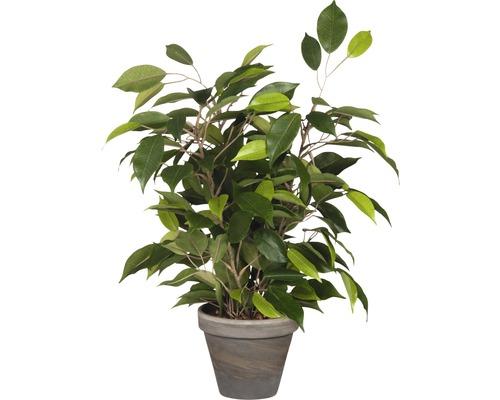 Konstväxt MICA Ficus Natasja 40x30cm grön