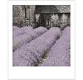 HORNBACH Style Color glansgrad 3 nr 17 Blommor från Provence 2,5 l